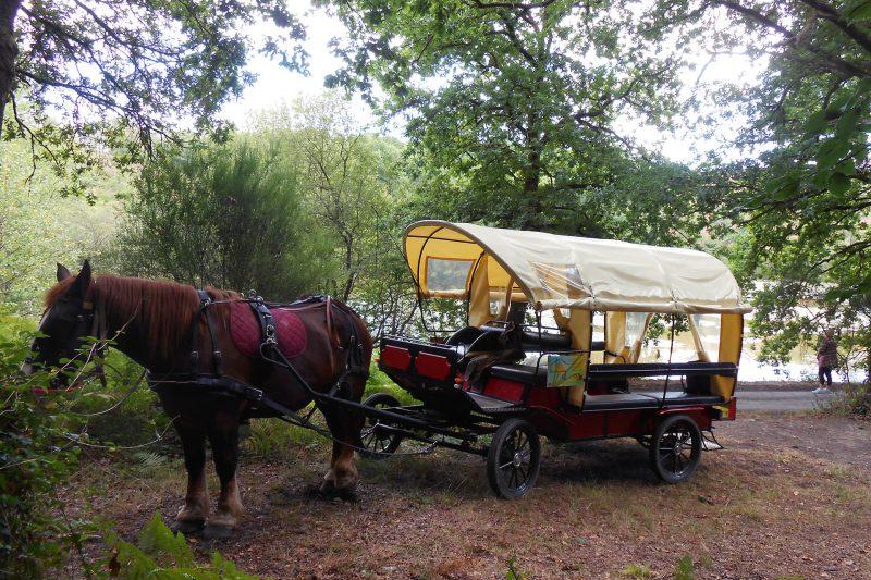 calèche PMR vallée du don Guémené-Penfao 44 découverte milieu naturel au pas du cheval Pays de Redon
