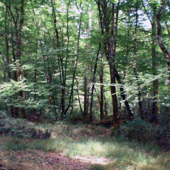 Promenade en Forêt du Gâvre entre Blain et Guémené-Penfao