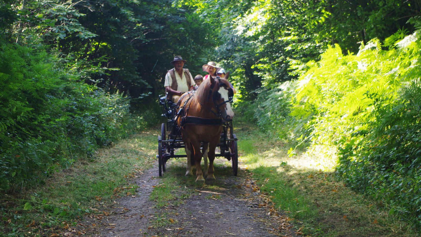 Au fil des chemins Guémenéens vive l'aventure avec Michel le cocher Pays de la Fée Carabosse Guémené-penfao 44 Bretagne Sud Loire Océan